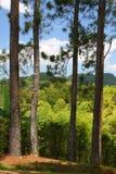 Изображение запаса плантации Croydon, ямайки Стоковое Фото