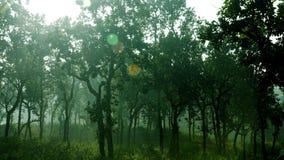 Изображение зеленого дерева в тумане утра Стоковое Изображение RF