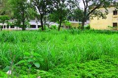 Изображение зеленых лист естественное Лес и зеленое дерево джунглей Красивый естественный пейзаж Глубокие тропические джунгли r Б стоковое фото
