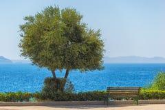 Изображение зеленых дерева и деревянной скамьи с голубым морем на предпосылке Стоковое Фото
