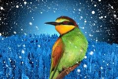 Изображение зимних отдыхов птицы рождества против предпосылки ландшафта зимы Стоковое Изображение
