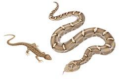 Изображение змейки и ящерицы на белизне Стоковые Фотографии RF