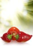 изображение зрелых перцев и томата против конца-вверх солнца Стоковая Фотография RF