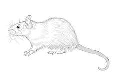 Изображение изображения чернил крысы Стоковая Фотография RF