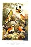 Изображение искусства белизна иллюстрации фингерпринта предпосылки бесплатная иллюстрация