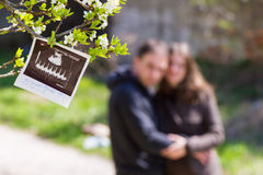 Изображение и родители ультразвука Стоковая Фотография RF