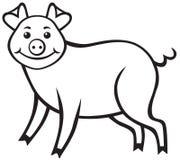 Милое piggy Стоковая Фотография