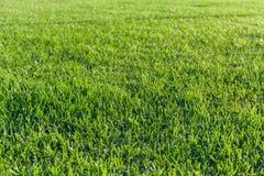 Изображение конца-вверх свежей предпосылки зеленой травы весны Стоковая Фотография RF