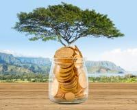 Изображение концепции богатства растя на деревьях из золотых монеток Стоковое Изображение