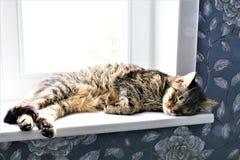 Изображение концепции slepping кота на windowsill Стоковые Изображения