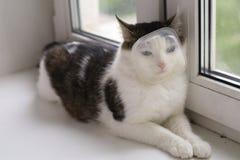 Изображение кота с коробкой пластмасового контейнера на наморднике Стоковые Фото