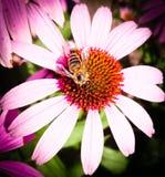Изображение красивейших лиловых цветка и пчелы Стоковое Изображение