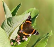 Изображение красивой бабочки сидя на цветках Стоковые Фотографии RF