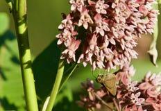 Изображение красивой бабочки сидя на цветках Стоковое Изображение RF