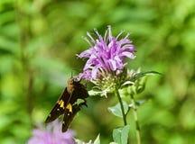 Изображение красивой бабочки сидя на цветках Стоковые Изображения