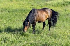 Изображение красивой коричневой лошади на выгоне Стоковые Изображения RF