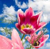 Изображение красивых тюльпанов в конце-вверх сада Стоковое Изображение