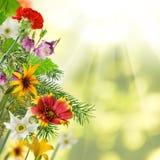 Изображение красивых цветков в конце-вверх сада Стоковая Фотография RF