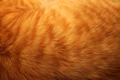 Изображение красной предпосылки меха котов Стоковая Фотография RF