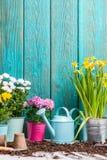 Изображение красочных хризантем в баках около деревянной загородки Стоковые Изображения
