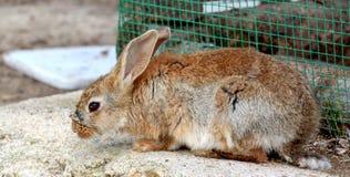 Изображение кролика зайчика Стоковая Фотография RF