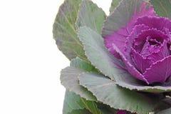 Изображение крупного плана листовой капусты Стоковое Изображение
