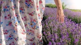 Изображение крупного плана молодой женщины идя на поле лаванды и касающие цветки Стоковое фото RF