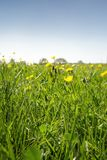 Изображение крупного плана травы стоковое изображение