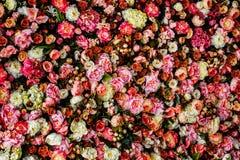 Изображение крупного плана красивой предпосылки стены цветков Стоковое Изображение RF
