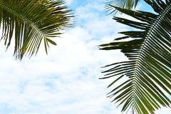 изображение курорта назад смолотое в природе солнечный день Стоковое фото RF