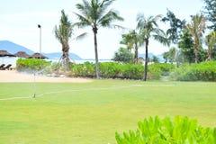 изображение курорта назад смолотое в природе солнечный день Стоковое Изображение RF