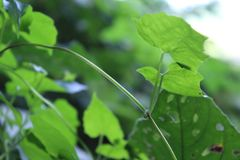 изображение листьев зеленого цвета стоковое фото rf