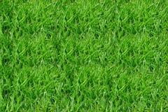 Изображение листьев создано на заднем плане стоковое фото rf