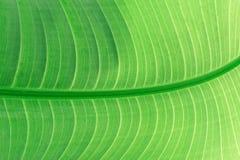 Изображение листьев создано на заднем плане стоковые фотографии rf