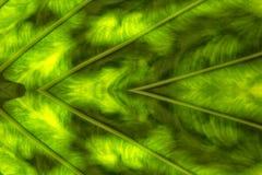 Изображение листьев создано на заднем плане стоковое изображение