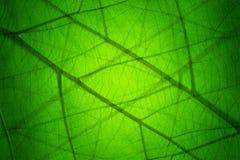 Изображение листьев создано на заднем плане стоковые фото