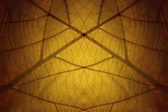 Изображение листьев создано на заднем плане стоковое изображение rf