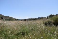 Изображение луга горами Стоковое Фото