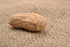 Изображение макроса арахиса в раковине на предпосылке джута Стоковые Изображения