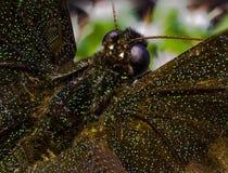 Изображение макроса бабочки в саде Стоковые Изображения RF