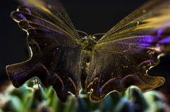 Изображение макроса бабочки в саде Стоковое фото RF