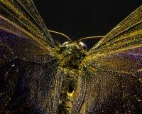 Изображение макроса бабочки в саде Стоковое Фото
