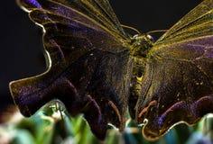 Изображение макроса бабочки в саде Стоковая Фотография RF