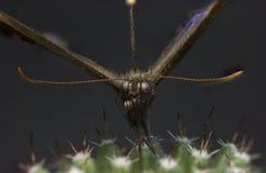 Изображение макроса бабочки в саде Стоковая Фотография