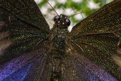 Изображение макроса бабочки в саде Стоковое Изображение