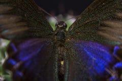 Изображение макроса бабочки в саде Стоковое Изображение RF