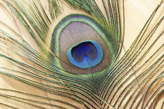 Изображение макроса пера павлина Стоковое фото RF