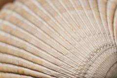 Текстура и картина раковины куколя Стоковые Фото