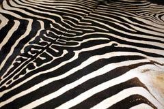 Изображение макроса текстуры кожи зебры как предпосылка Стоковое Изображение