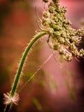 Трава макроса стоковые фото